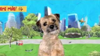 Sara The Border Terrier