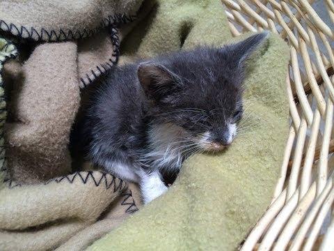Baby Kitten Rescue