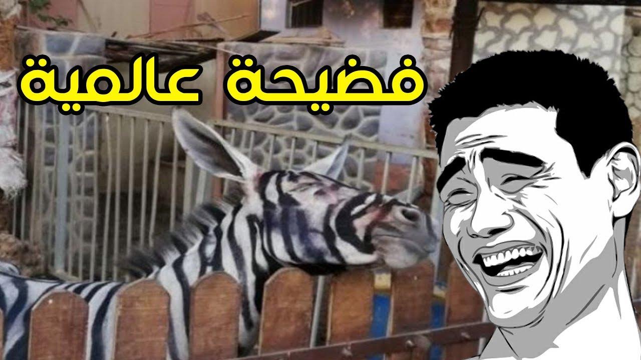فضيحة الحمار الوحشي في حديقة الحيوان في مصر 2018