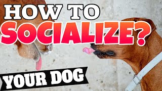 HOW TO SOCIALZE YOUR DOG  Simple and Easy!