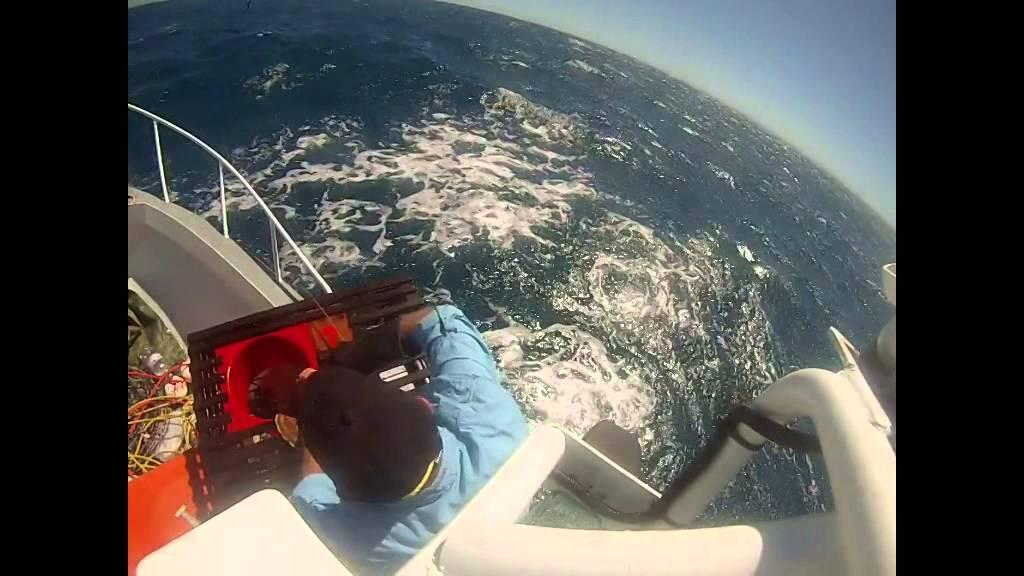Pulling craypots off mandurah coast western australia for Sjfc fish r net