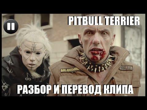 Pitbull Terrier - Разбор и перевод клипа