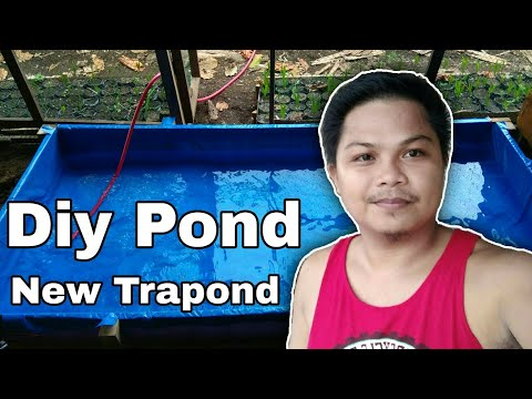 How i make Pond for mollies and guppies | DiY Pond , New Pond , Pond for Guppies