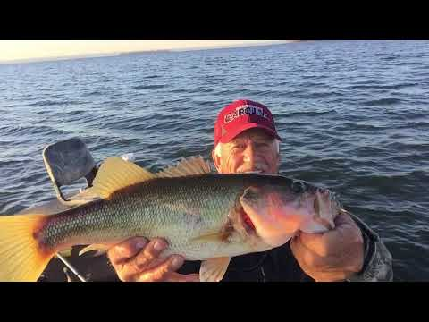 Tips On Vertical jigging A Berry's Spoon