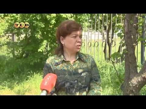 Сорт вишни Тургеневка фото, отзывы, описание, характеристики