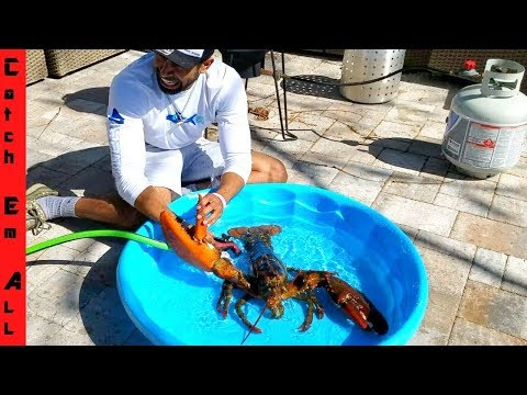 15lb GIANT LOBSTER In POOL! BATH TIME