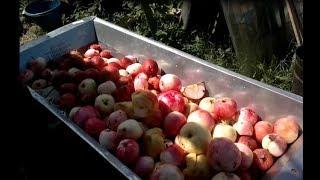 Прес и дробилка для яблок, или как я делаю сок.