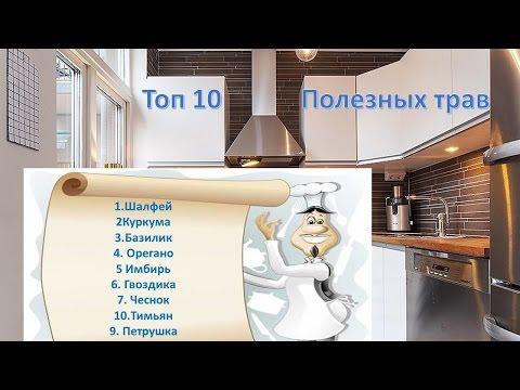 Топ 10 самых полезных трав и специй