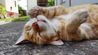 Relaxing Cat Video 164