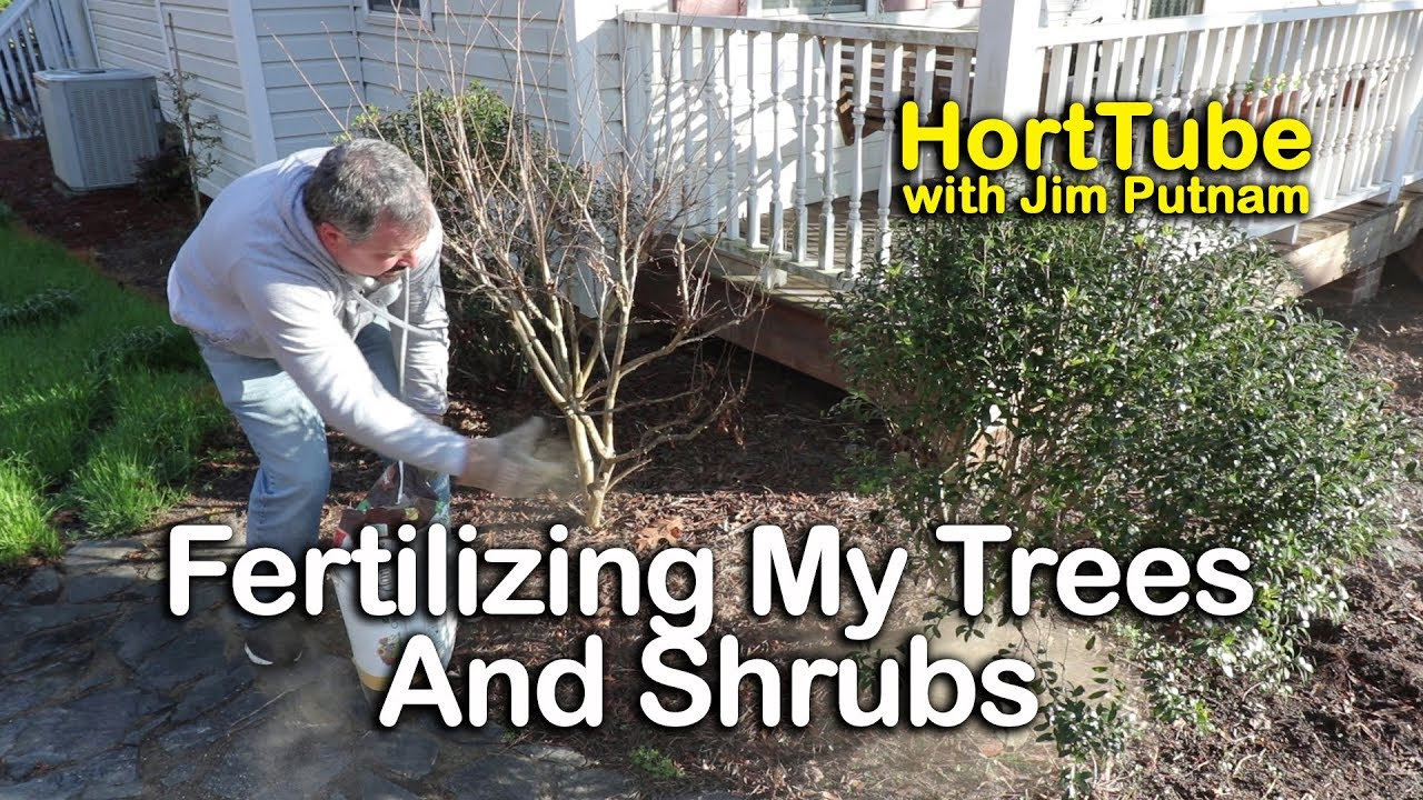 Fertilizing My Shrubs And Trees