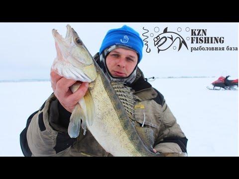 Ловля судака, берша и окуня на Каме на балансиры, бокоплавы и блёсна. База KZN Fishing. Kamfish