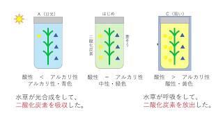 BTB液を使った水草の光合成実験。中学・高校入試で、頻出の問題ですが、...