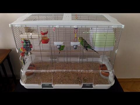Muhabbet Kuşu Kafesi Nasıl Olmalı ( Hagen Vision L01)
