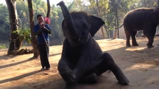 Шоу слонов в Тайланде/Shaw elephant in Thailand