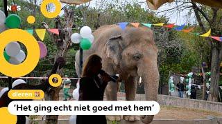 De 'eenzaamste olifant ter wereld' is niet meer alleen