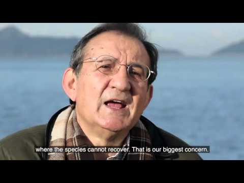 A VULNERABLE OBSERVER - Documental voiced by Susana Larraz