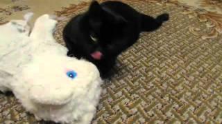 кот трахает киску