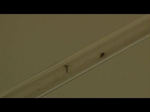 Chikungunya virus spreads through French Antilles