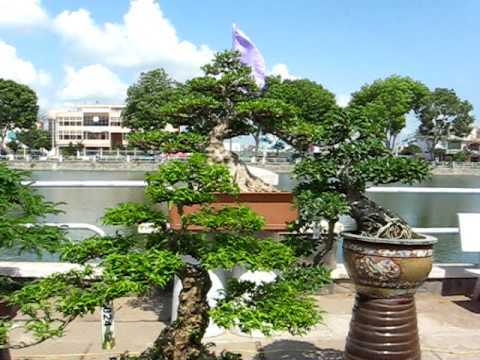 thi bonsai Tiền Giang 19/04/2010
