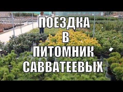 Растения для сада. Едем делать покупки в питомник Савватеевых