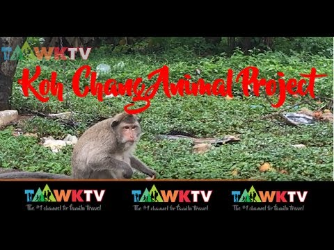 Koh Chang Animal Project: Family Travel Mini Guides:  TaawkTV RealStories