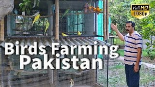 Aviary Birds Breeding Farm Sahiwal Pakistan