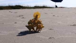 Mini Strandbeests