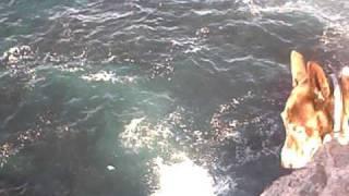 Maroubra Beach, Lurline Bay, Cliff Jumpers