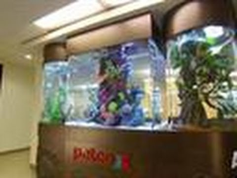 Reveal petco tank tanked youtube for Petco fish for sale