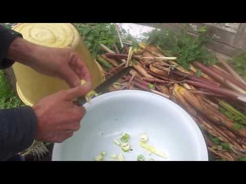 Как готовить бамбук - полезнейший продукт