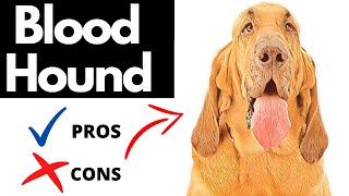 Bloodhound Pros And Cons | The Good AND The Bad!!