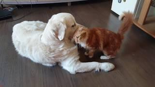 нежность. как кошка с собакой