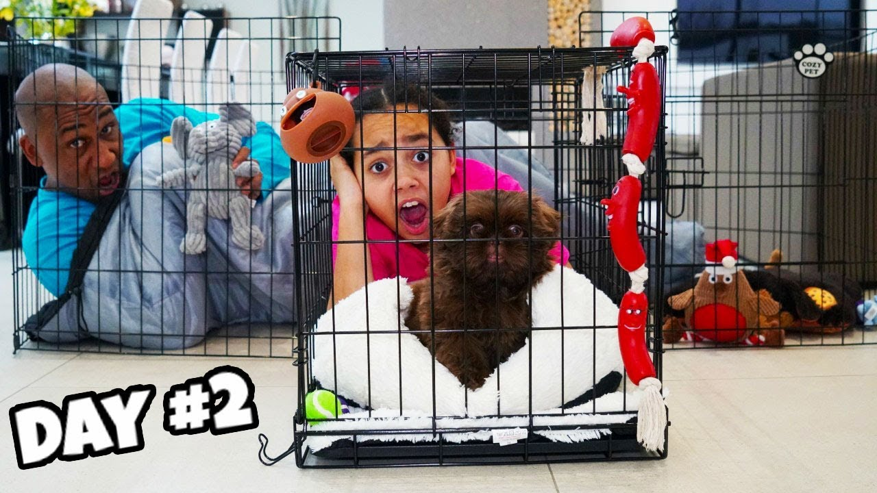 Last To Leave Tiana S Puppy Play Pen Wins 1000 Challenge Youtube