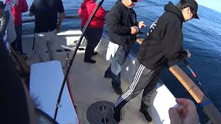 Slow Pitch Jigging for GIANT Chucklehead rockfish at the Channel Islands, California!
