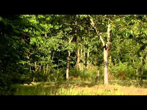 Tierpark Europa - Das emsige Eichhörnchen