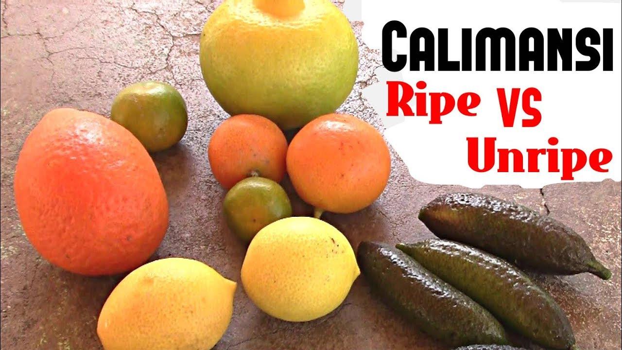 Calamansi: Ripe vs Unripe comparison - Weird Fruit Explorer Ep 255