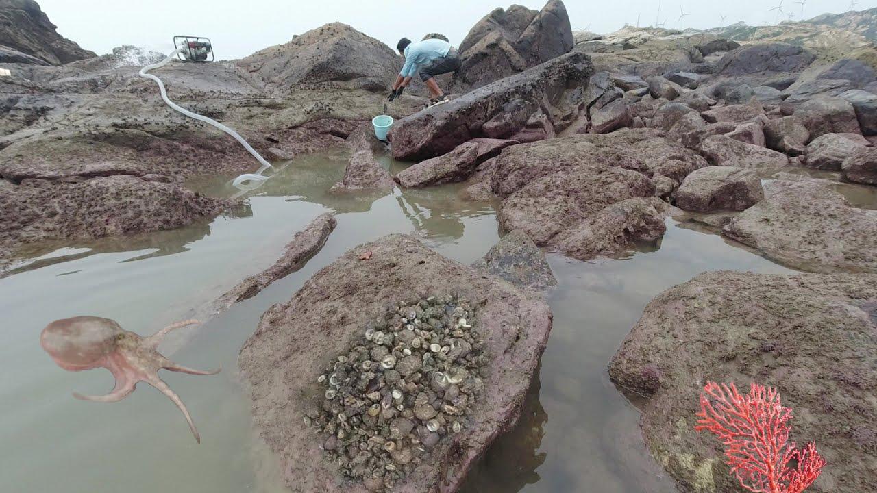 上次没抽干的岛坑直冒泡,浑水摸鱼抓几十斤爆桶了,早被粉丝预订