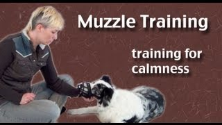 Muzzle Training- Focusing On Calmness - Clicker Dog Training