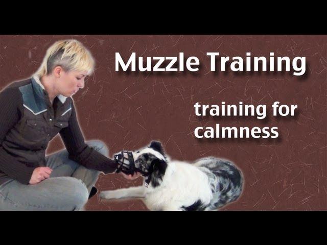 Muzzle Training- focusing on calmness - clicker dog training