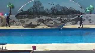 Прекрасная игра дельфинов.