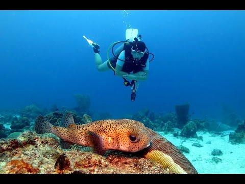 Diving Curacao - Sun Reef Village & The Beaches 2014