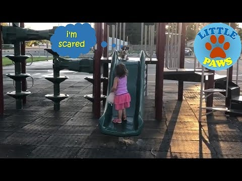 Funny Puppy and Baby Playing on Slides | Funny & Cute
