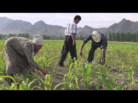 The Culture of the Kyrgyz
