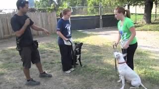 Dog Handling Classes At Austin Pets Alive!