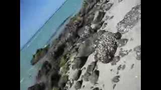 playa balandra BCS