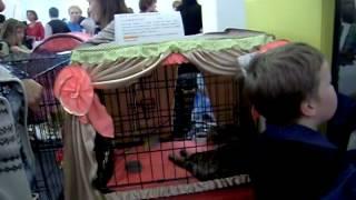 Выставка кошек в Сыктывкаре - весна 2012