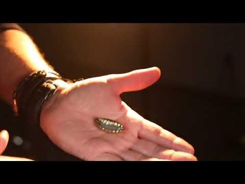 Saturn Magic -Gecko Pro System (Gimmicks and Online Instructions) by Jim Rosenbaum - Trick
