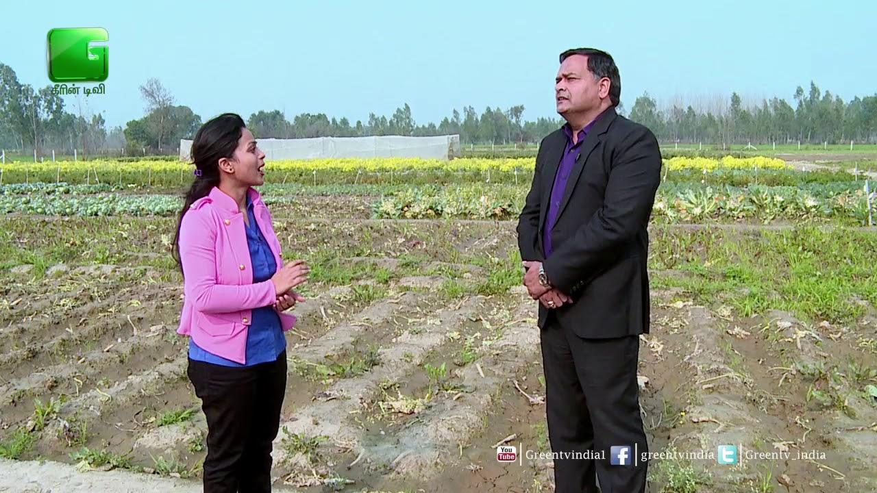 Dr L K Pandey, Managing Director, Ananya Seeds Pvt Ltd On Green TV