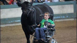 'Cow whisperer' boy in wheelchair leads steer, melts hearts thumbnail