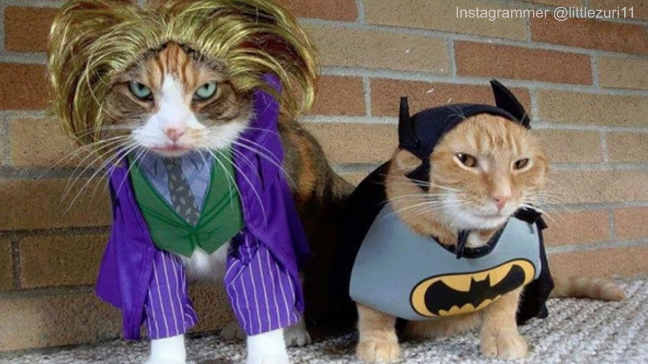 & How Your Kitty Feels About Cute Pet Costumes | Funny Cats - YouTube